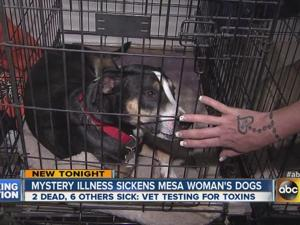 Mystery illness kills two dogs in Mesa