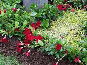Gardening-New Plants