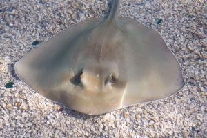 Stingray Bay returns to Phoenix Zoo 