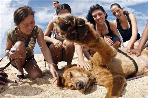 Pets Lucky Annenberg