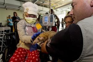 Pets Hospital Animals