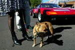 Classic cars on display in Scottsdale