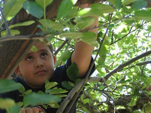 Slide Rock State Park hosts fall apple festival