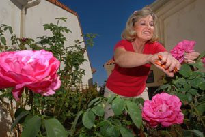 A once-novice rosarian puts her best blooms forward