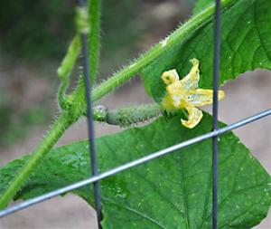 Gardening-Saving Seed