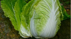 Growing Asian vegetables? A glossary of terms