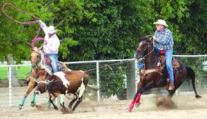 Pro Rodeo Team Roping