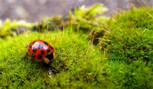 Gardening-Organic Pest Control