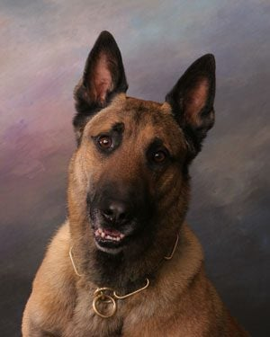 Probe: Cops cleaned K-9 car, had dog cremated