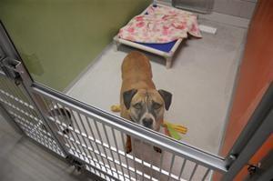 Pets Dog Rehab