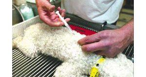 County may require microchips for pets