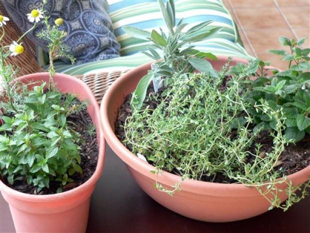 Gardening Medicinal