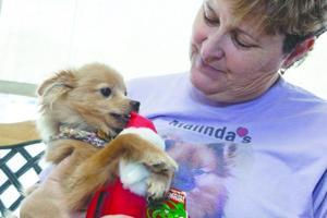 Malinda's Pampered Pets