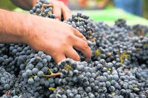 From the cellar: Napa, Sonoma valleys still set the California standard