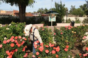The Rose Garden at Mesa Community College