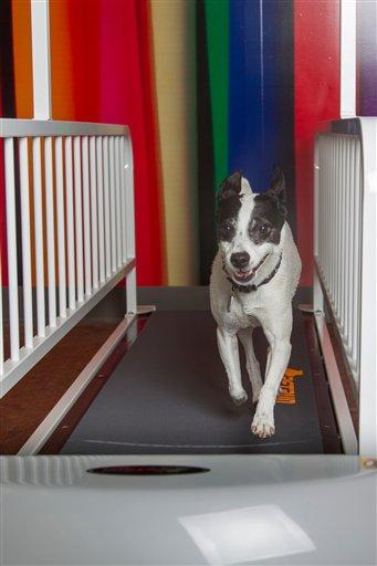 Pets - Treadmills