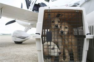 Paw and a prayer: Pilots save shelter animals