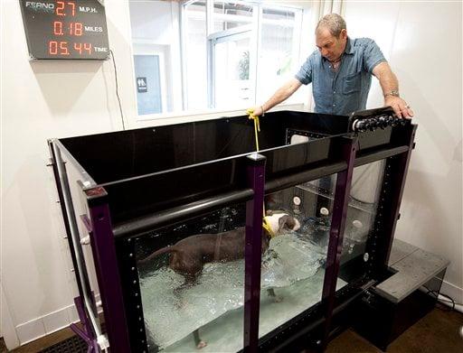 Pets-Treadmills