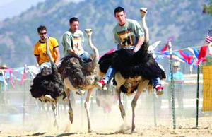 Best of Chandler 2014 Annual Event: Chandler Chamber Ostrich Festival
