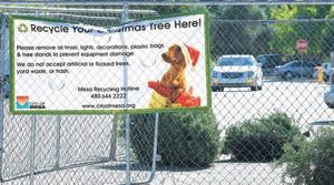 Post-Christmas 'treecycling' encouraged