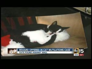 $2,500 reward offered in case of mutilated Mesa cats