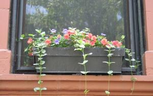 Window box design: Color, repetition, shape
