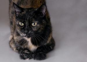 Pet of the Week: Lois