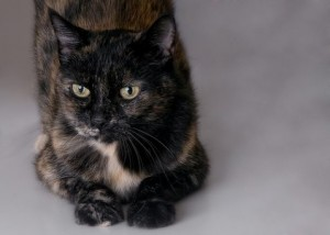 Pet of the Week: Lois
