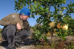 Florida farmers brace for cold