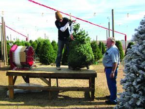 Tim Mitchell Christmas Trees