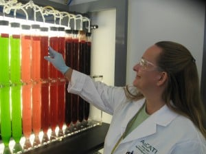 From algae to fuel