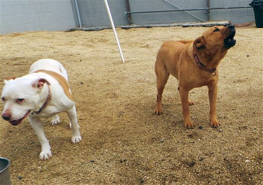 Pets-Barking