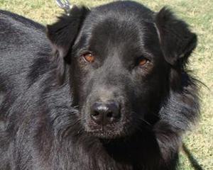 Pet of the Week: Bleeker