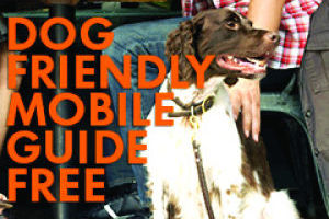 Dog Friendly Guide
