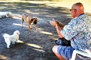 Pets Dog Talk