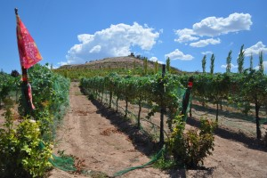 Verde Valley vinyard