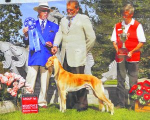 Gilbert dog competes for Westminster title
