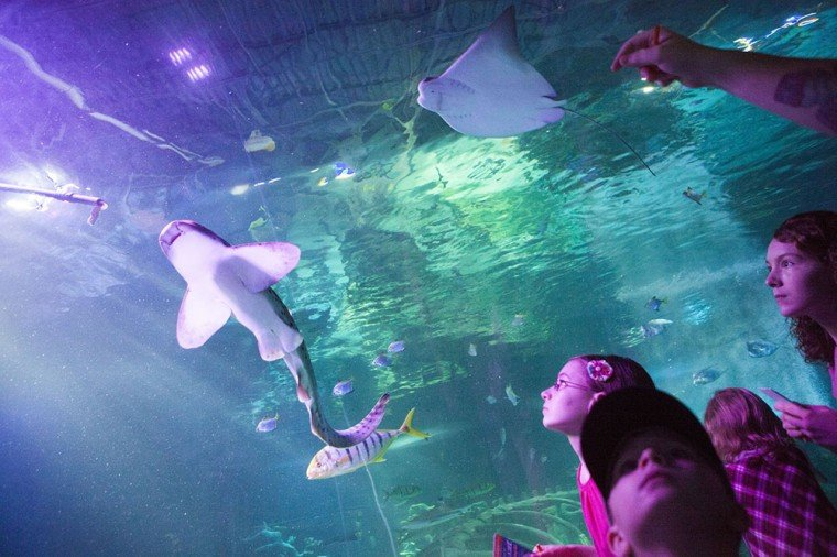 Shark Week At Sea Life Ahwatukee Foothills