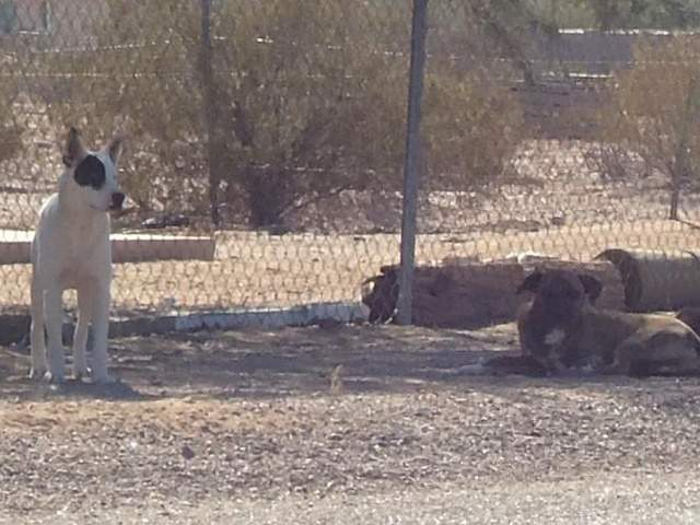 Wild dogs attack neighbors, kill pets in Maricopa