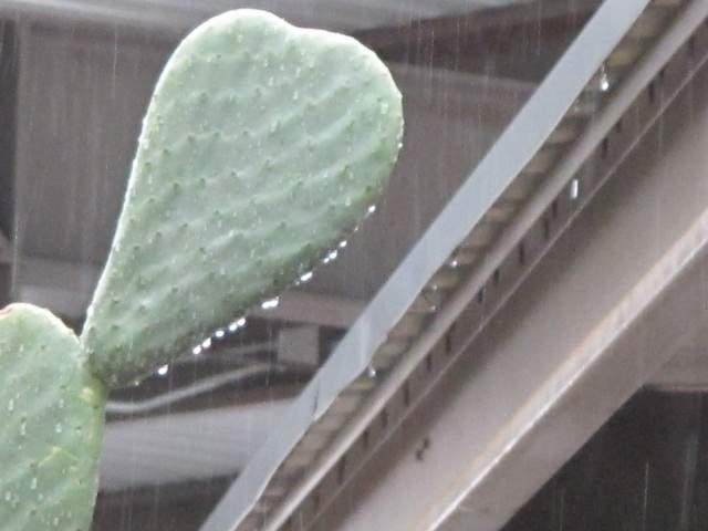 Record Rain