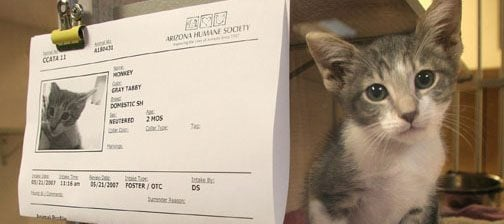 Valley Humane Society battling kitten overload