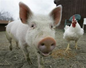 Rethinking Farm Animals