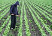 Lettuce recalled over E. coli concerns