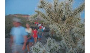 Hikes reveal beauty of Sonoran Desert at night