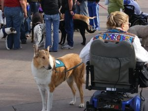 'Walk 'n Roll' with your dog for charity