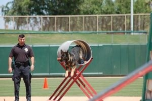 K-9 competition displays top dogs' work ethic
