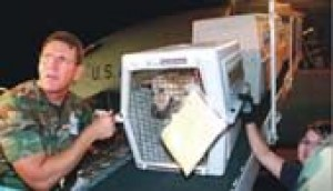 Rescued dogs arrive to open arms
