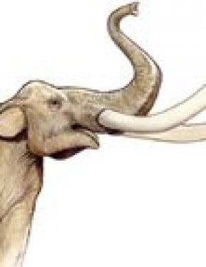 Mammoth bones not alone at Gilbert site