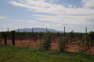 Worth the Trip: Elgin wine fest and Prescott rodeo