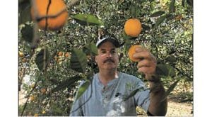 Rain not fruitful for Arizona farmers